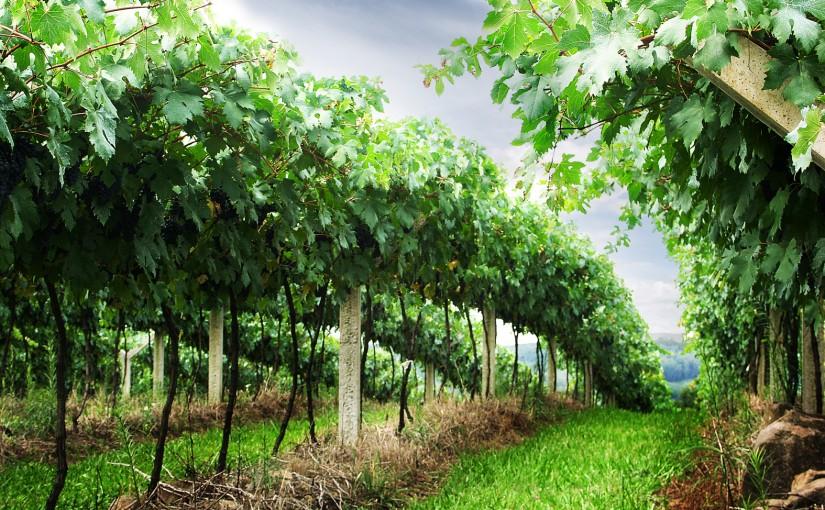 Prodej vína - jak správně vybrat